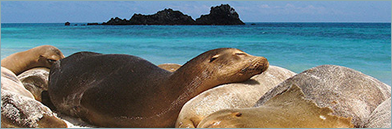 Travel to Ecuador and The Galapagos with Kids